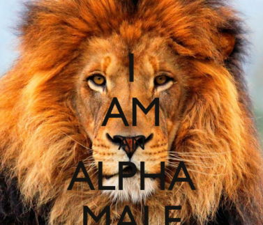 i-am-an-alpha-male